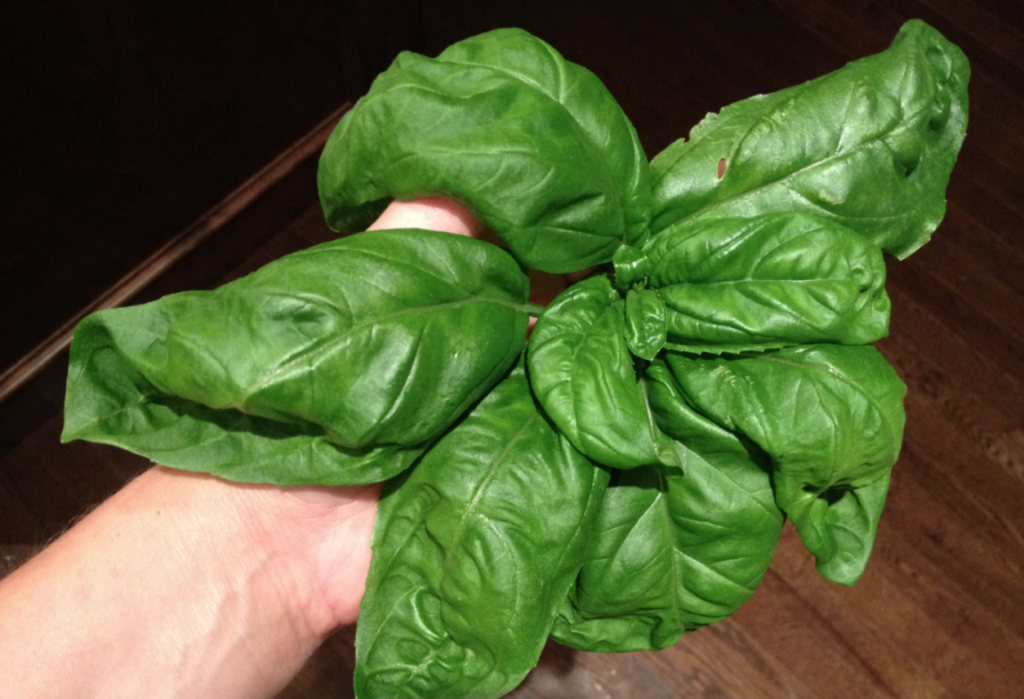 How to Quit Smoking with Basil Leaves