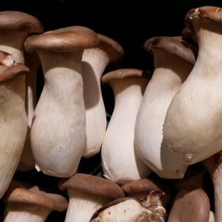 common types of Mushrooms and their medicinal uses